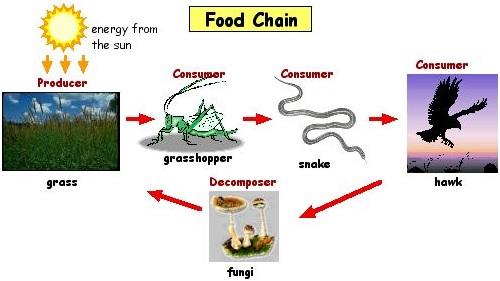 food-chain-1