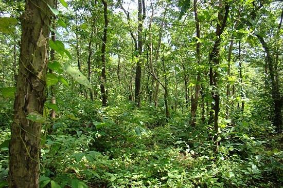 Tropical Wet Evergreen Forests Webmaggu An evergreen forest is a forest made up of evergreen trees. webmaggu